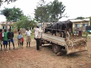 Uganda 10 097
