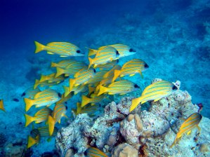 maldives-diving-l
